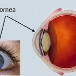 Paquimetría y glaucoma: ¿Por qué más es menos?