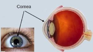 Los médicos oftalmólogos y los ópticos se tienen que concienciar de que la presión ocular tiene que estar ligada