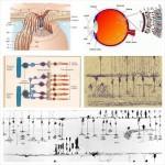 Regenerando la visión perdida en glaucoma ¿es posible?